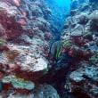 秋なってきたな。沖縄ダイビング 那覇シーマリン