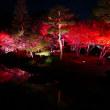 ラスト紅葉 2017 由志園ライトアップ 動画あり