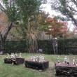 銀の森 11月