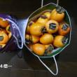柿むき柿むき(;^ω^)