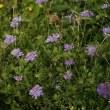 白山 お花畑の花たち カラフル編②
