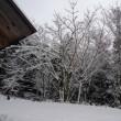 本格的「冬」到来か?