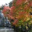 「紅葉/円山公園」