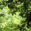 新緑の清々しさ 【ひで某】