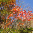 秋深し。。。。毎年お馴染みの道☆須賀尾峠~野反湖