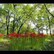 林の中の彼岸花