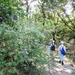 北高上緑地巡回(平成29年9月13日)