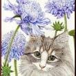 色鉛筆画380 (マツムシソウと猫)