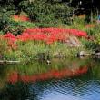 彼岸花その3 川島環境楽園