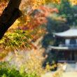 京都勧修寺の紅葉:11月3日