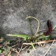 イガイガ毒々しい幼虫