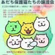 27日参加にゃんこ!