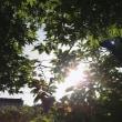 日差しきつい夕景