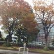 11月20日(月)千代のベッド