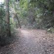 散歩・健康の森公園