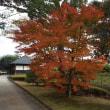 偕楽園の西門付近の紅葉