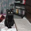 映画「旅猫レポート」