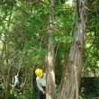 笠置クライミングエリアで森造り (7月14日)