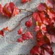暖かな秋の日