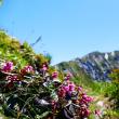 今日の大山 ユートピアコース 大山登山②  コース付き