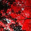 赤と黒の空。