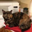 包装紙に座る猫