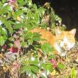 今日の日向ぼっこ猫!