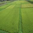 米どころの田んぼは綺麗でしたね!何処まで緑していたが空が綺麗すぎる。