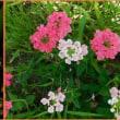 夏の花鑑賞会