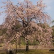 2018年の春!(1)「小石川後楽園」