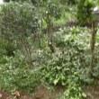 庭の南側の剪定他