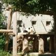 ジャイアントパンダ 講演会