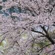 ★牛伏寺界隈の桜など 2018