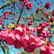 桜環境センターで田島ケ原サクラソウ自生地の展示中
