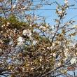 朝焼けと共に今日のスタート・鹿児島は4月の猫ちゃん日和・満月?