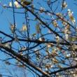梅の花&うぐいす♪