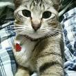 アメリカの「猫の日」