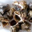 ニシ貝とサザエはどう違う? …瀬戸内ご当地フードシリーズ