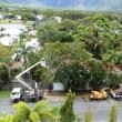 街路樹の枝切り作業