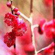 春近し・・・④