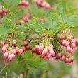 長野県諏訪郡下諏訪町にある八島湿原では、夏鳥のノビタキが飛び回っています