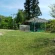 庭全体の芝刈り完了