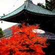 清涼寺と紅葉