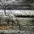 初雪は(このへんにしては)大雪。