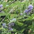 仏花と榊を
