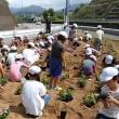 田辺東部小学校 花植え