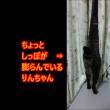 カミナリの一部始終を見てしまった猫・・・