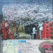 小見川 城山公園の桜まつり ボンボリ点灯式は3月22日