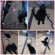 遊ぶ気満々な黒猫姉妹