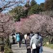 ぶらり旅・2018水戸の梅まつり(2018.3.11)②高校生野点茶会etc